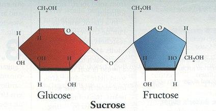 Vì sao đường, nước ngọt gây mỡ gan, béo...